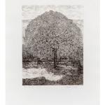 Ettore Fico, Il grande melo, 1979, acquaforte 700x500 mm, P.A. (€ 400 + spese di spedizione)